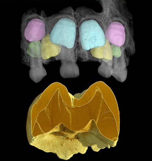 Sn-neandertaljaw-thumb-autox600-4779