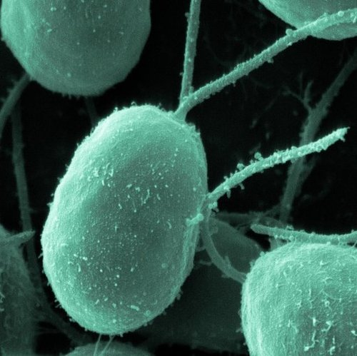 Rtemagicp_chlamydomonas_biologypictures_txdam18186_dd4c4b